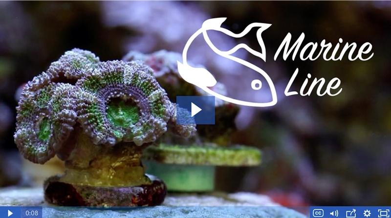 Hanna Marine Line Video for Saltwater Aquariums